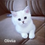 Oliviia Silver Dew