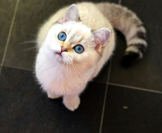 Наши прекрасные котята