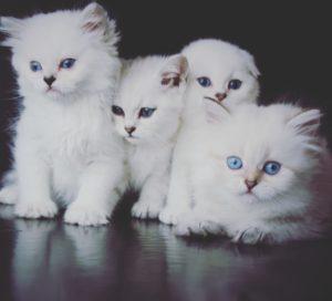 Наши котики